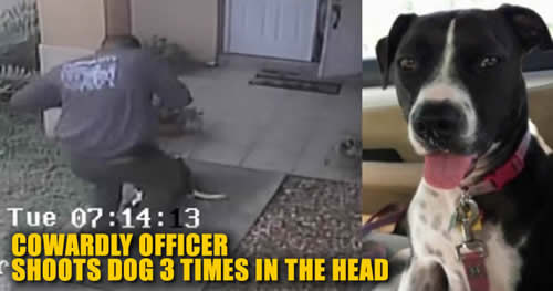 officer Marcus Terry Florida City police shoots dog